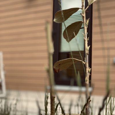 Tinyhaus am Ellertshäuser See