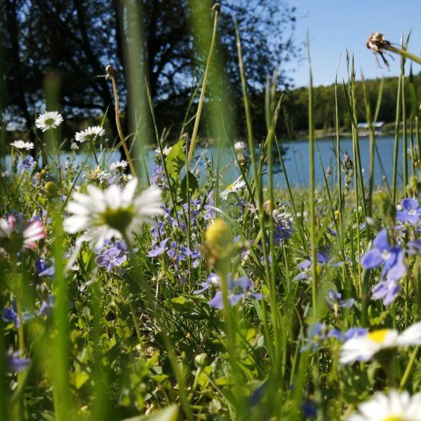 Blumenwiese am See